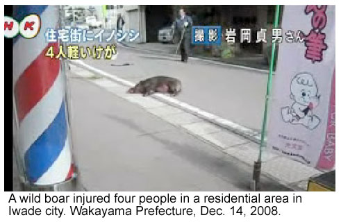 Wild boar killed after attacking 4 in Japan city.