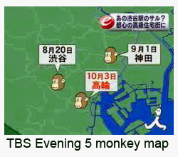 TBS Tokyo Evening Five news monkey sightings map