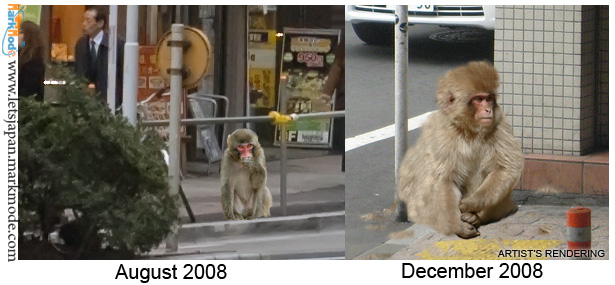 Tokyo monkey grows thick coat of fur for winter.