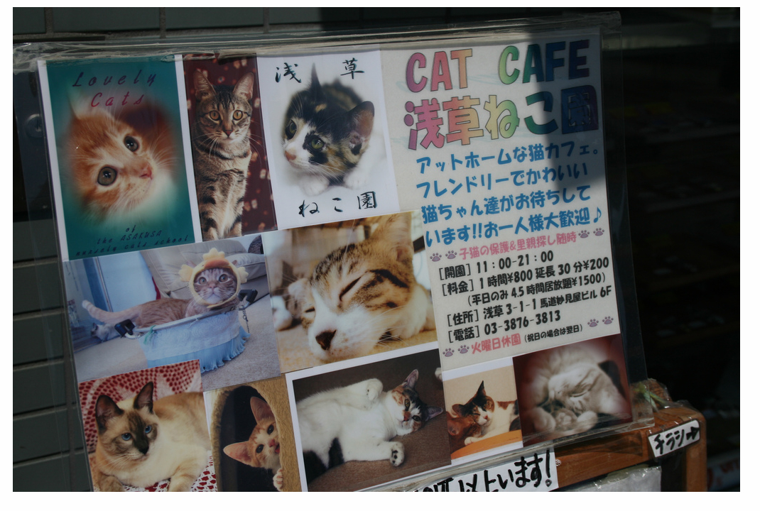 Sign in front of cat cafe neko café in Tokyo, Japan