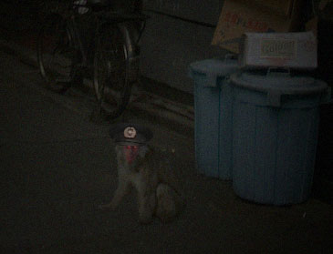 Reader-submitted file cell phone photo of Japanese macaque loose in Shibuya