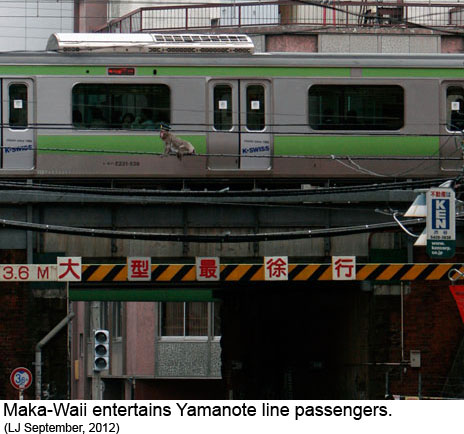 Maka Waii romps on overhead cables next to the Yamaote linein Tokyo in this September 2012 photo.