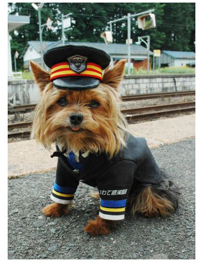 Maron the dog stationmaster in Japan